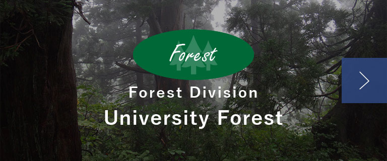 Forest Division University Forest