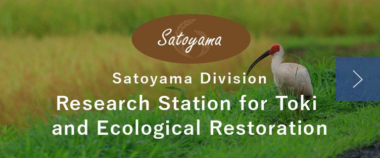 Satoyama Division Research Station for Toki and Ecological Restoration